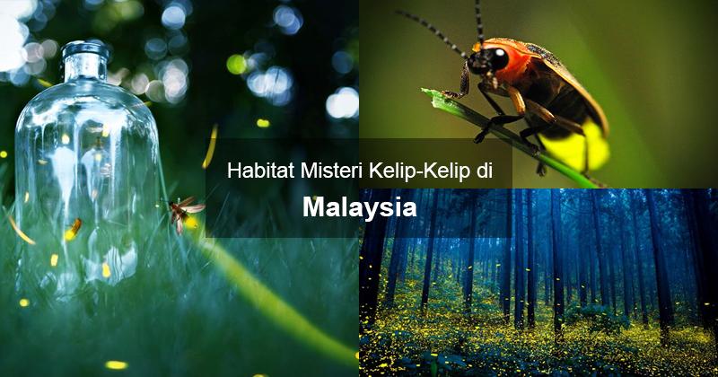 Habitat Misteri Kelip-Kelip di Malaysia