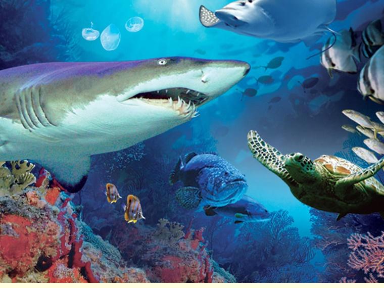 suria klcc aquaria