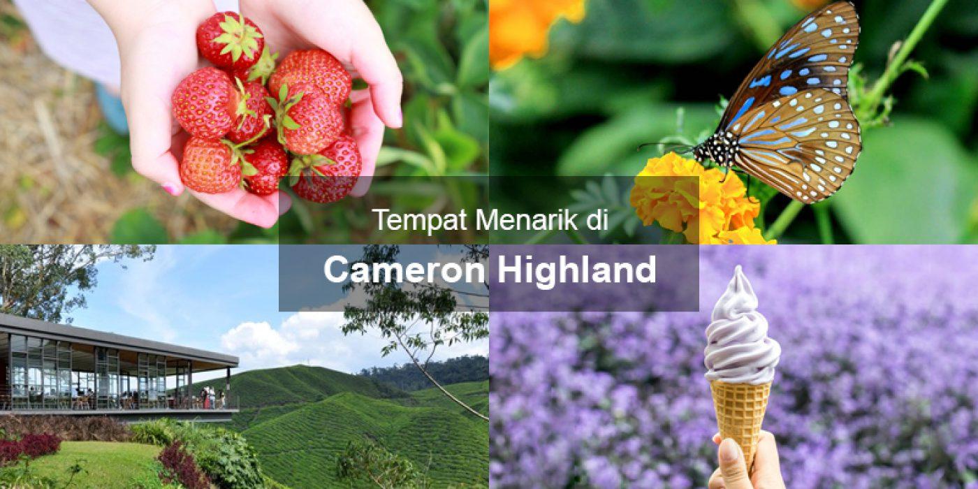 Tempat Menarik di Cameron Highland